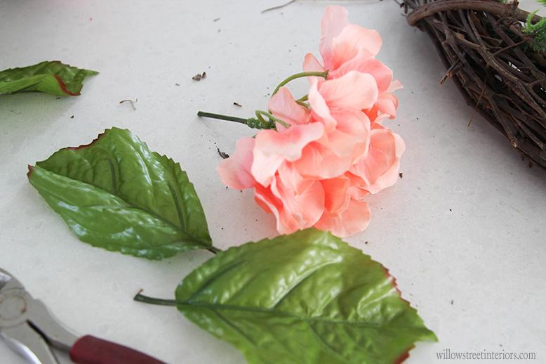 clipping hydrangea
